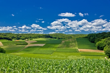 Beautiful green agricultural landscape in Croatia, corn and hay fields Stock Photo - 16642660