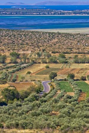 kornati national park: Olive trees grove field, Vrana lake and Kornati national park Stock Photo