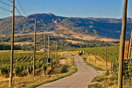 kalnik: Mountain vineyard region scenic road, Kalnik, Croatia