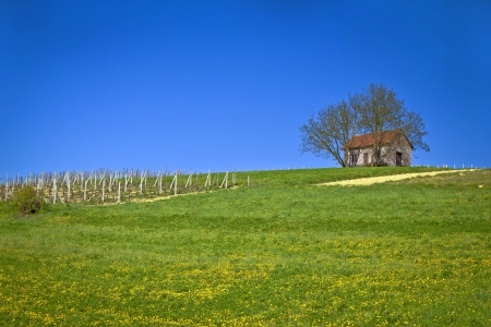 Cottage and vineyard on idyllic hill, Kalnik, Croatia