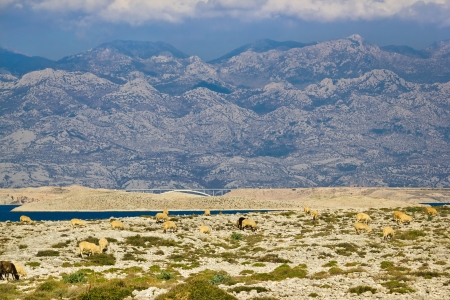 Stone desert under Velebit mountain, Island of Pag, Croatia photo