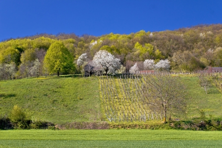 kalnik: Idyllic springtime hill vineyard and nature, Kalnik mountain, Croatia Stock Photo
