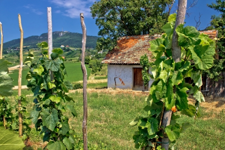 kalnik: Traditional vineyard and cottage in Kalnik mountain area, Croatia Stock Photo