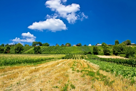 Vineyards and traditional cottages on green hill of Kalnik mountain, Prigorje region, Croatia Stock Photo
