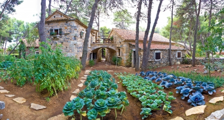 Stone village garden with vegetables in Dalmatia, Croatia Standard-Bild