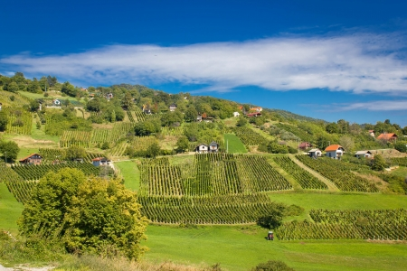 kalnik: Idyllic green hill vineyards and cottages area, Kalnik mountain, Croatia
