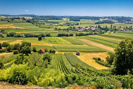 Beautiful green landscape in Kalnik vineyard area, Prigorje region, Croatia