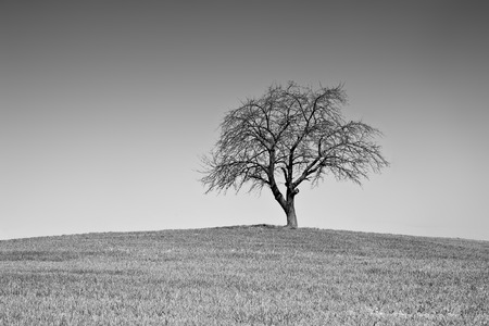 Single black and white tree on countryside hill photo