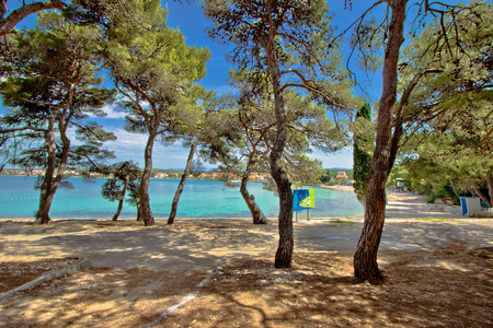 Pine tree sand beach in Croatia, Dalmatian village of Petrcane