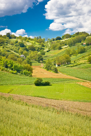 kalnik: Green landscape hill with vineyards and cottages of Prigorje region in Croatia