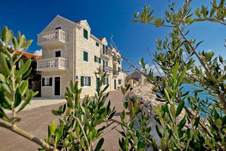 seafront: Bibinje village waterfront and olive tree view, tourist destination in Dalmatia, Croatia