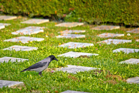 unmarked: Crow on unmarked grave mystic scene