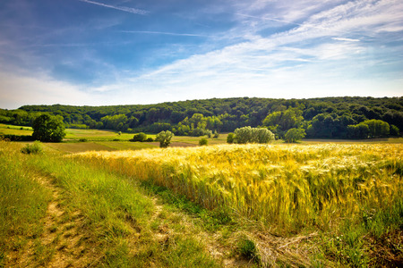 kalnik: Idyllic agricultural landscape summer view, wheat field, Croatia Stock Photo