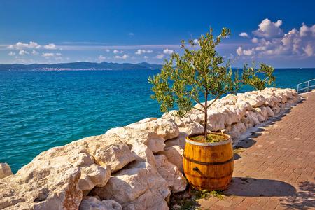 Olive tree in wooden barrel by the sea, Bibinje, Croatia Stock Photo