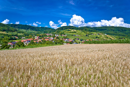kalnik: Wheat field and pictoresque mountain village in pure green nature, Sudovec village in Croatia