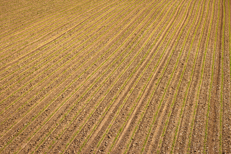 kalnik: Agricultural layer view od plowed field with young crop Stock Photo