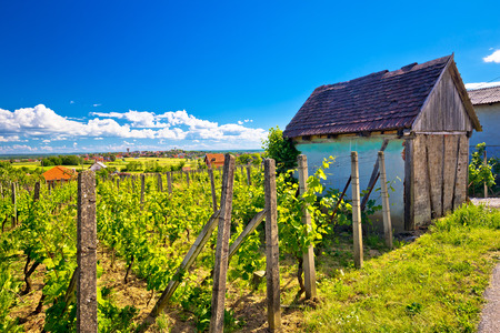 Traditional vineyard and cottage in Vrbovec, Prigorje region of Croatia