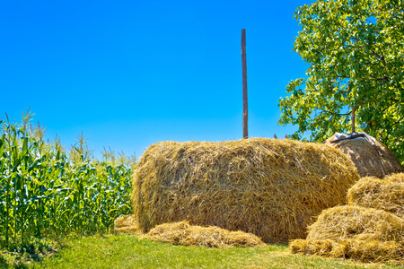 Hay stack and corn field summer view, agricultural landscape of northern Croatia