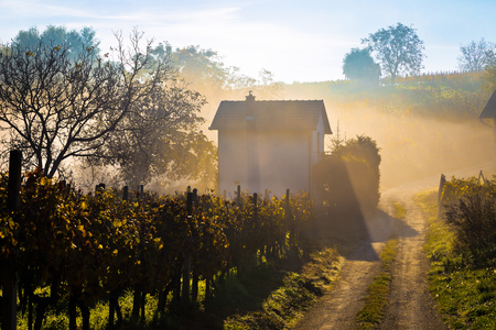 Sun rays in morning fog vineyard view, Prigorje region of Croatia