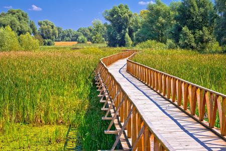 Kopacki Rit marshes nature park wooden boardwalk view, Baranja region of Croatia