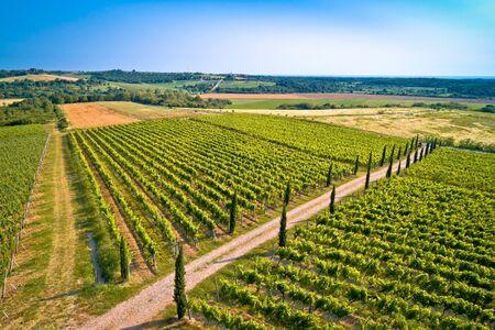 Istrian vineyard region aerial view. Town of Buje green landscape, Istria region of Croatia