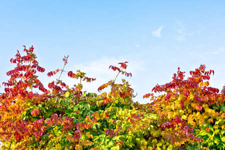 Autumn leaves color spectre and bright blue sky background, colors of fall