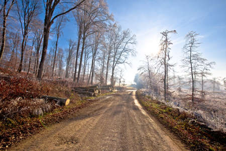 Frost forest trees and country road view, Prigorje region of Croatia