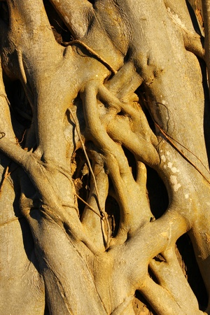 equipoise: Tree roots.