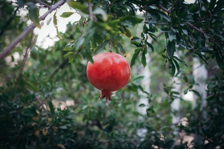 garnets: Red garnet