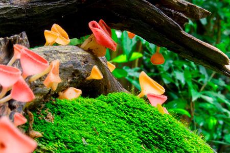 fungi: fungi cup
