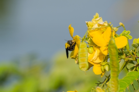 Little bee get pollen with yellow flower Stock Photo - 24524562