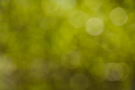 Blurred background side of foliage trees. Background for design insertion. High quality photo
