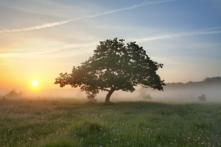 Sunrise, morning mist and oak. photo