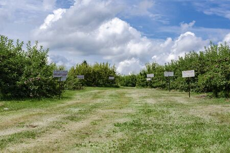 An orchard lane with signs depicting types of apples.  Blue dramatic sky.