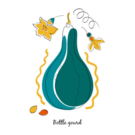 gourds: Vector gourd and leaves in cartoon style Illustration