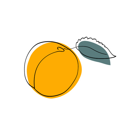 apricot: Vector illustration Dark yellow apricot with leaf Illustration