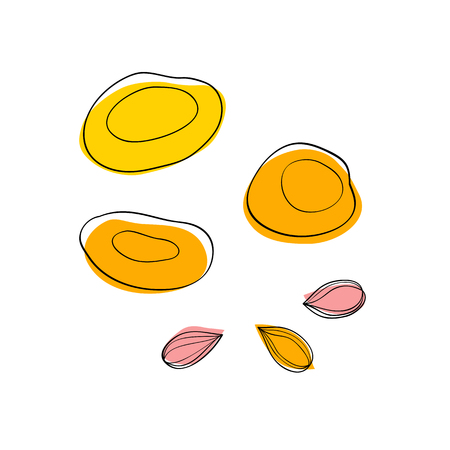 apricots: Vector set Dried apricots and apricot seeds Illustration