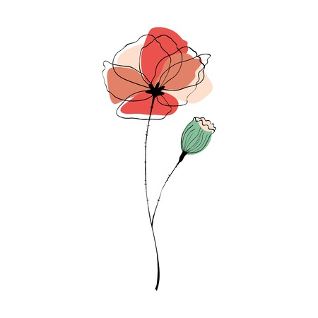 poppy field: Poppy flower and poppy capsule vector illustration in scandinavian style