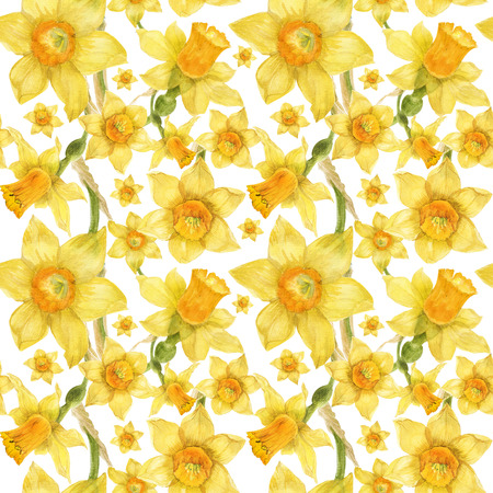 Watercolor botanical realistic floral pattern with narcissus. Bright yellow daffodil on a white background, path included