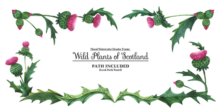 Watercolor hand painted header frame Plants of Scotland. Thistle on a white background. Isolated, path included. Stok Fotoğraf