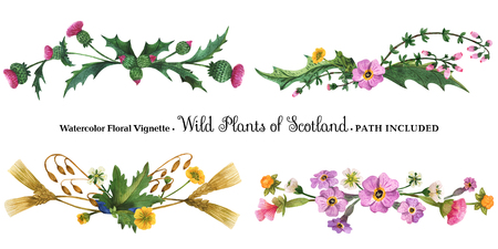 Floral  hand painted  watercolor vignette.  Wild plants of Scotland on a white background. Isolated, path included.