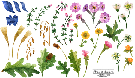 Floral decorative hand painted watercolor Plants of Scotland. Isolated objects  on a white background, path included. Stock Photo