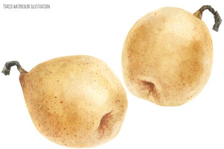 Fresh chinese pears Stok Fotoğraf - 121134752