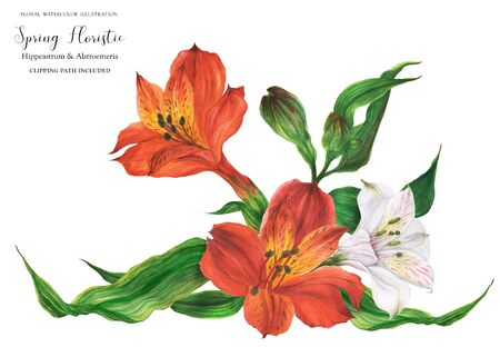 Garland vignette with red and white peruvian lily flowers, realistic watercolor illustration