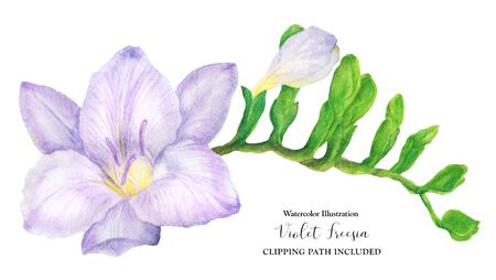 Fresh delicate purple freesia branch with buds, watercolor illustration Archivio Fotografico