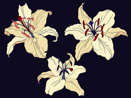 Oriental Lily three flowers on a dark color