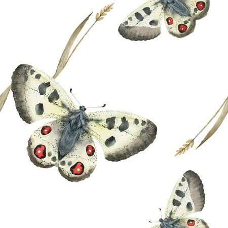 Watercolor seamless pattern Apollo butterfly and grass plant. Realistic style, white background, path included
