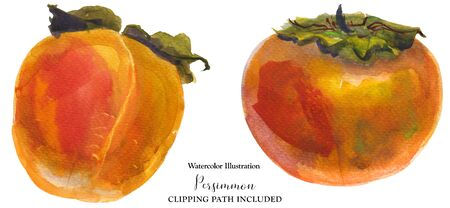 Winter orange persimmon fruits on a white background, watercolor with clipping path