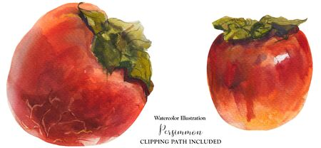 Winter red persimmon fruits on a white background, watercolor with clipping path