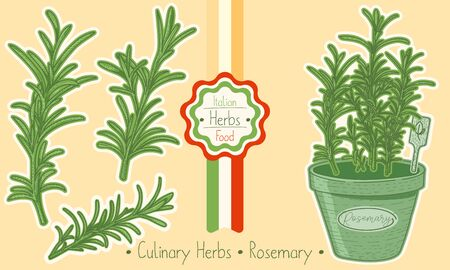 Food and culinary herb Rosemary, hand-draw sketch illustration Illustration